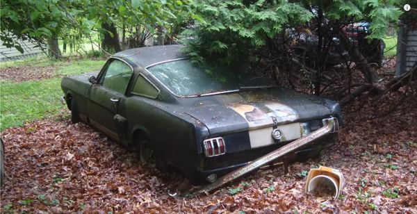 1966 Shelby GT350H Abandoned In Yard Finally Rescued