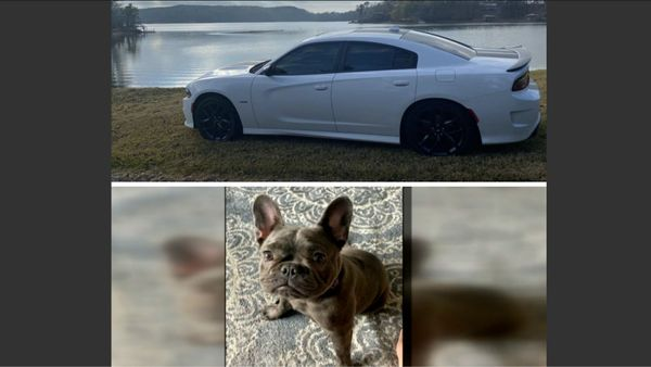 Dodge Charger And Bulldog Stolen In Atlanta